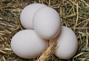 egg-2048476_640